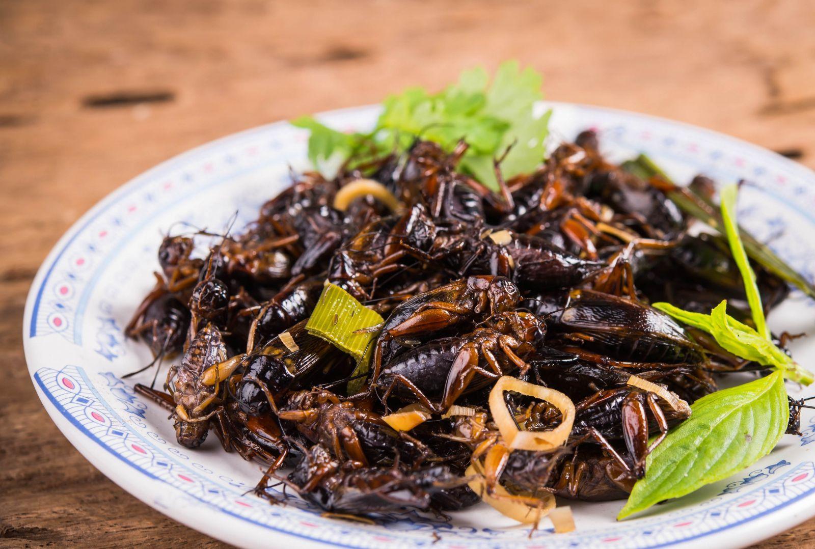 Kas yra plikų dėmių vabzdžiai. Vabzdžiai