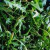 Imuninei sistemai stiprinti – lobiai iš žolynų