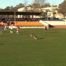Per varžybas net pusvalandį futbolo aikštėje šeimininkavo kengūra