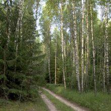 Nepilnametė prievarta įsodinta į mašiną, nuvežta į mišką ir sumušta