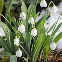 Artimiausią mėnesį pavasario nelaukite