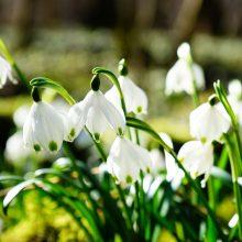 Orai: laukia maloni permaina – pavasariškos šilumos gūsis
