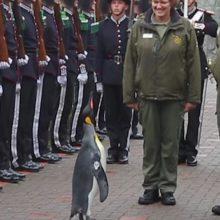 Edinburgo zoologijos sodo pingvinas paaukštintas į generolus