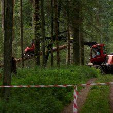 Teismas: Lenkijos vykdyti kirtimai Belovežo sengirėje pažeidė ES įstatymus