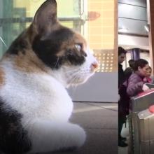 Benamė katė Mitsi – žvaigždė