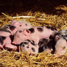Gyvūnų pašaruose – pokyčiai dėl vario