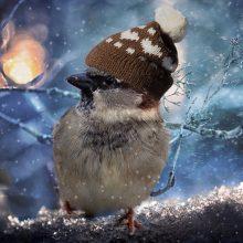 Orai vis labiau primins žiemą