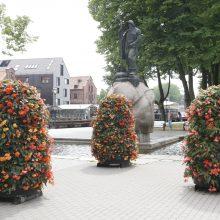 Klaipėdos gėlių žiedus alina sausra