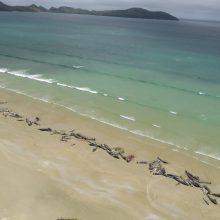 Atokiame Naujosios Zelandijos paplūdimyje žuvo 145 delfinai