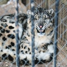 VPT: zoologijos sodo rekonstrukcijos projektą gali tikslinti jo rengėjai