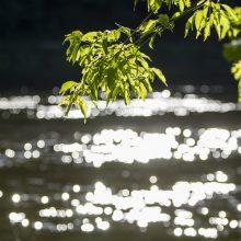 Rokiškio rajone upėje nuskendo 40-metis vyras