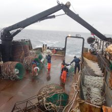 Krabų žvejybos istorijos sukasi teismuose