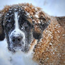 Orai: sniego mažės, bet kaustys šalčiai