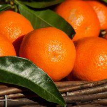Gruzijos mandarinų eksportuotojai atrado Lietuvą
