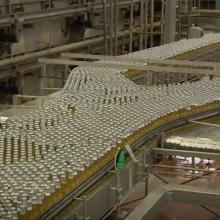 Dėl klimato kaitos pasaulyje pasijus alaus trūkumas?