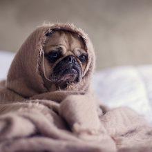 Psichologė aiškina, kodėl šventės sukelia stresą