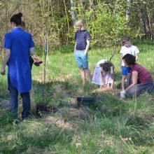 Čiupk kastuvą, sodink ąžuolą ir prisimink šeimos vertybes