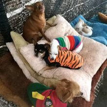 Meilė gyvūnams atvedė į Tailandą