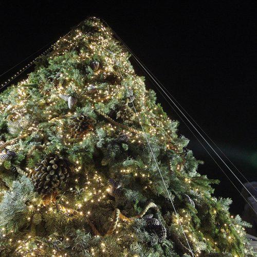 Vakare tviskanti pakoreguota Kauno Kalėdų eglė  © Evaldo Šemioto nuotr.