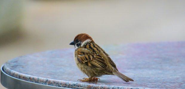 Ekspertai perspėja: pavasarį jūsų laukia sparnuotos negandos
