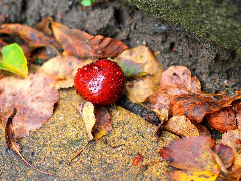 Orai: permainos jau pakeliui – savaitgalį ruduo subjurs