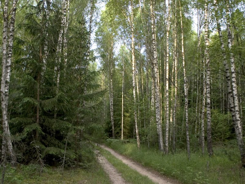 Vilniuje rastas galimai dingusio jaunuolio kūnas