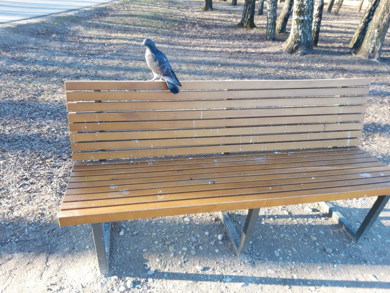 Apdergti Kalniečių parko suoleliai