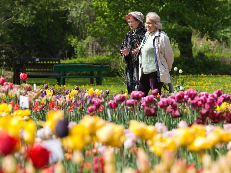 Seimas dar neapsisprendė dėl kompensacijų dirbusiems pensininkams