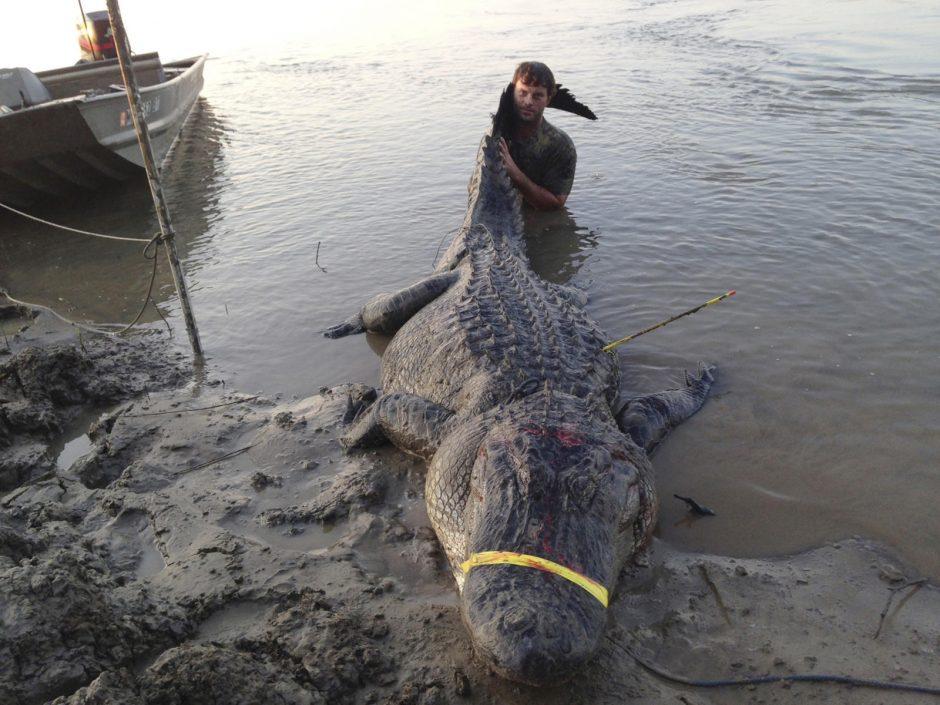 Misisipėje sugautas rekordinio dydžio aligatorius