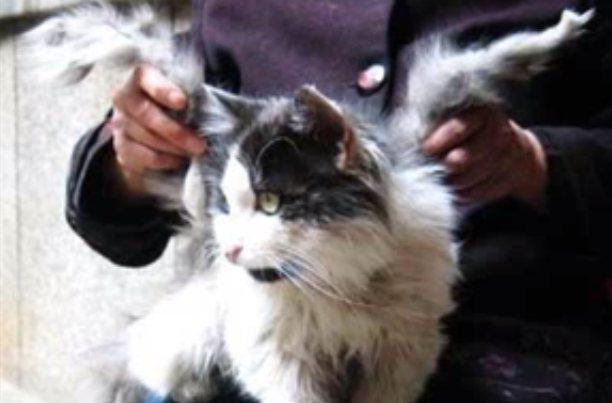 Sparnuotosios katės: kas jos tokios ir kaip joms išdygsta sparnai?