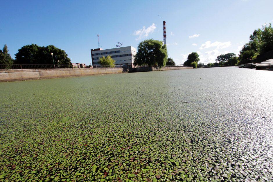 Danės upė vėl žalia