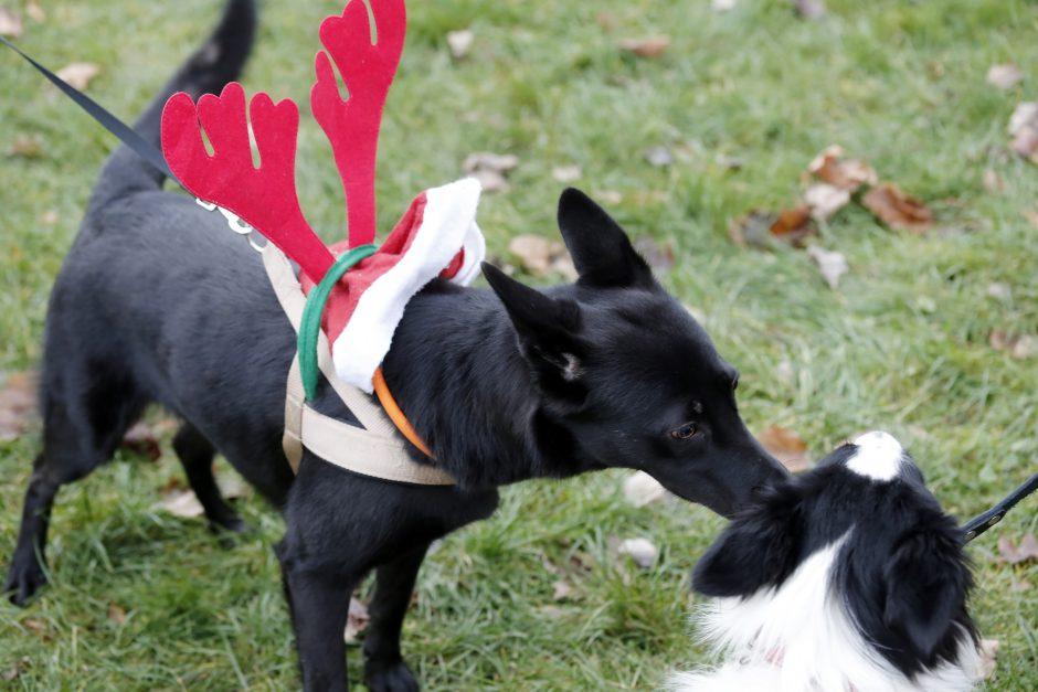 Dangės skvere – kalėdinė šventė keturkojams