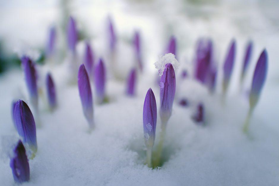 Orai: trumpą šilumos pliūpsnį vėl keis šaltis
