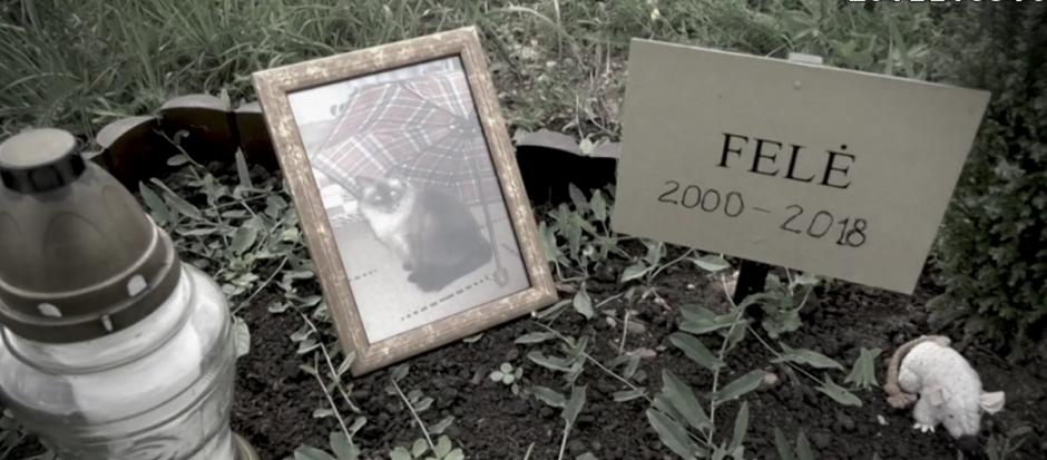 Papiktino valdininkų abejingumas: ruošiasi išniekinti gyvūnų kapines