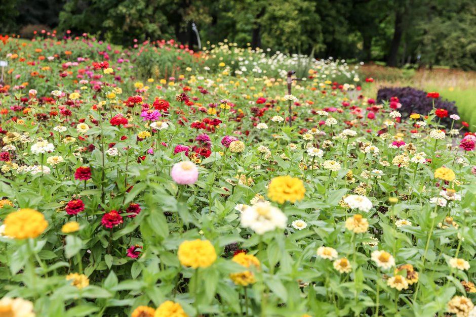 Botanikos sodas jau pasitiko rudenį