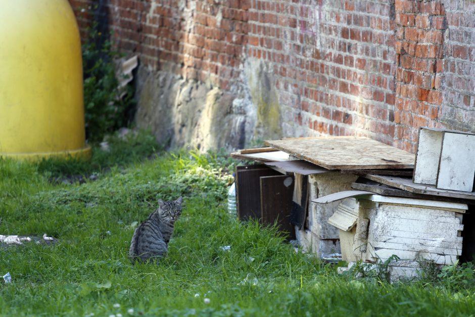 Uostamiesčio kiemuose – kačių būstai