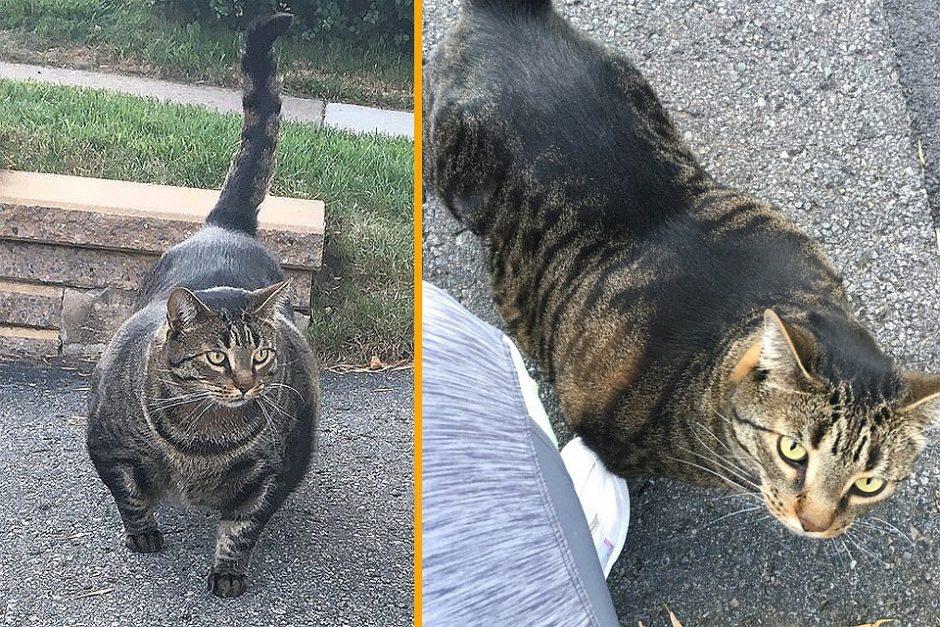 Katinas – raumenų kalnas