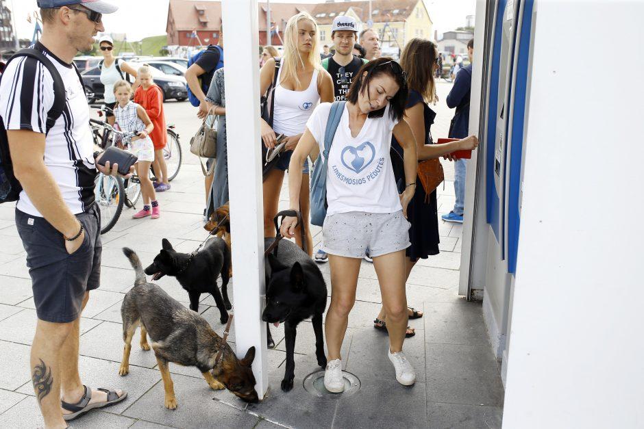 Tarptautinei benamių gyvūnų dienai – simbolis žygis ir piknikas prie jūros