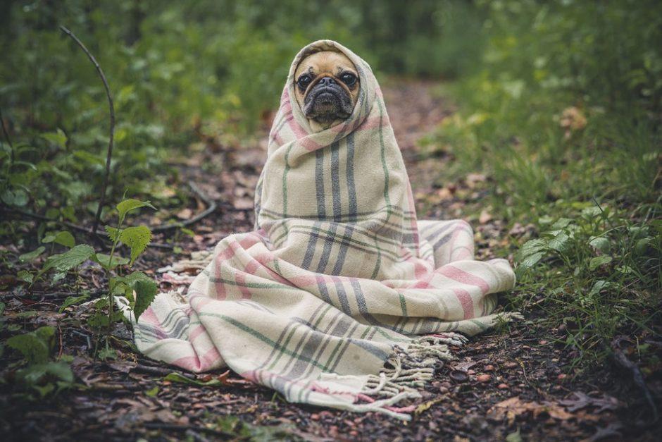 Iš meilės galima pakenkti: nepasiduokite liūdnam šuns žvilgsniui