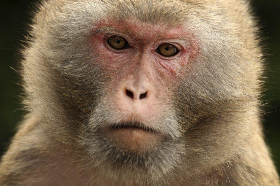 Skaudi istorija: iš namų beždžionės pavogtas kūdikis buvo rastas be gyvybės ženklų