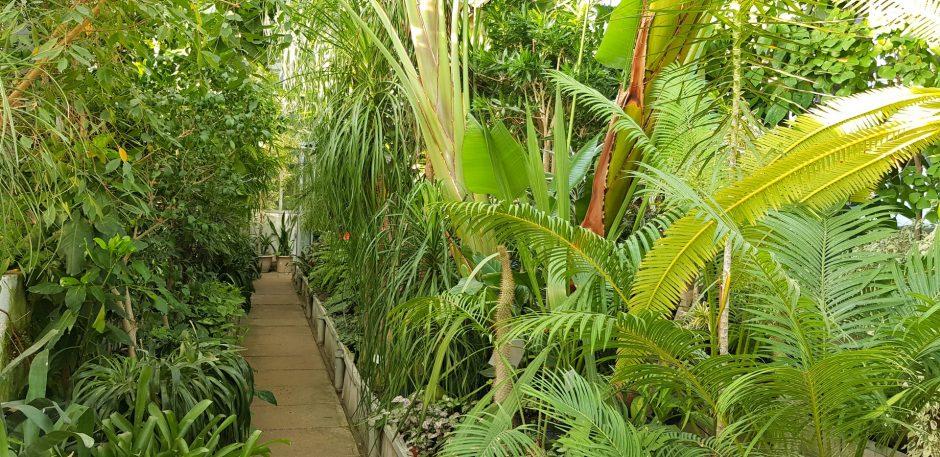 Botanikos sodas viduržiemį švęs ypatingai apšviestoje oranžerijoje