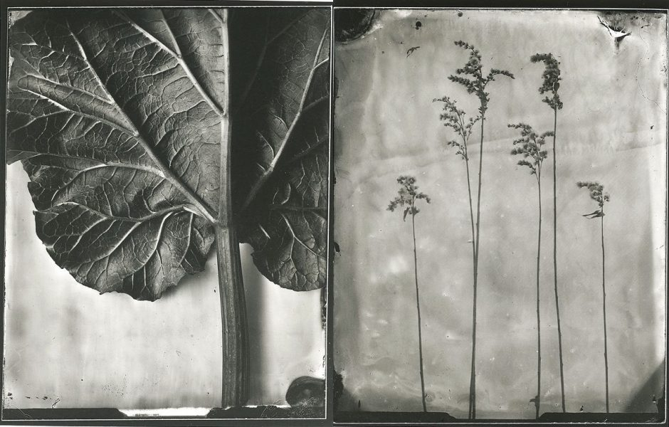 Botanikos sode veiksiančioje parodoje – sidabre įšaldytos vaikystės akimirkos