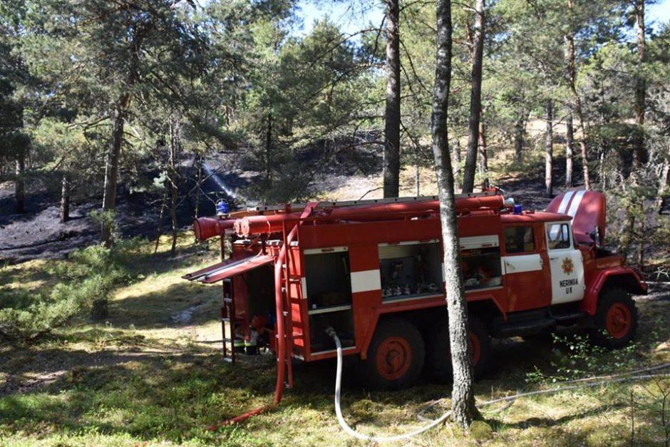 Neringos miškuose siautėja padegėjas