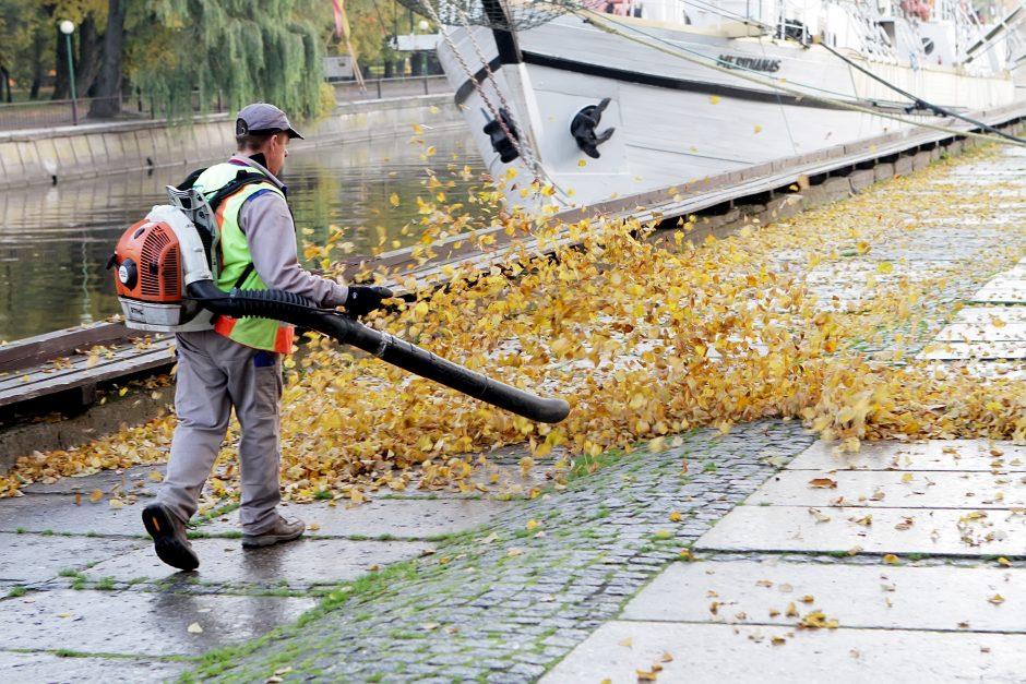 Prasidėjo lapų kritimas – ar Klaipėda jau pasiruošusi rudens iššūkiams?