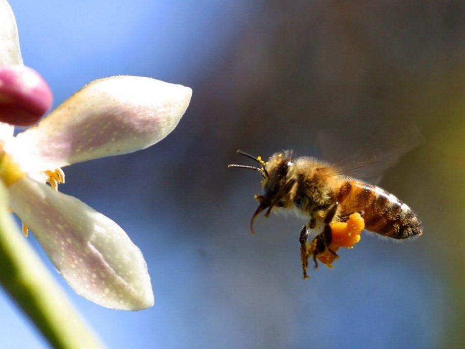 Vartokime sveiką medų