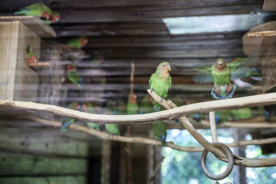 Meilė ir pavydas zoologijos sodo voljeruose – kaip meksikiečių serialuose