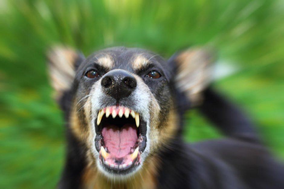 Šuo gynė girtą šeimininką ir įkando policininkei