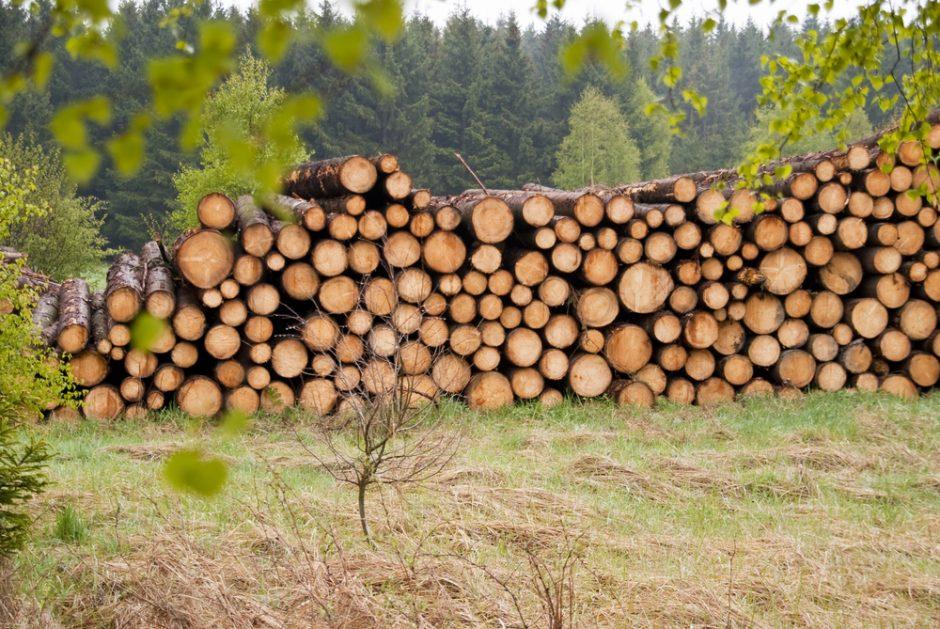 Šiauliečiai įtariami neteisėtai pardavę miško už 120 tūkst. litų