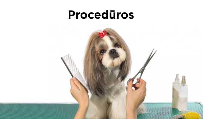 Ko reikia šuniukui: pirkinių sąrašas ir pagrindinės rekomendacijos
