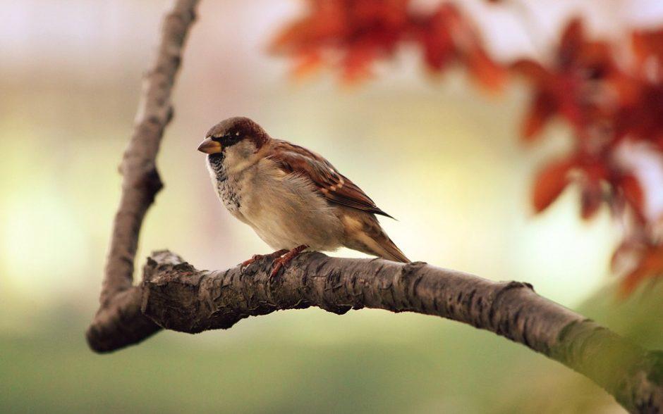 """""""The Ditties"""" narės pomėgis – fotografuoti paukščius"""